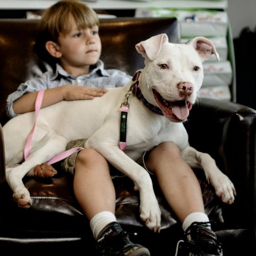 The Problem With People, Not Pit Bulls