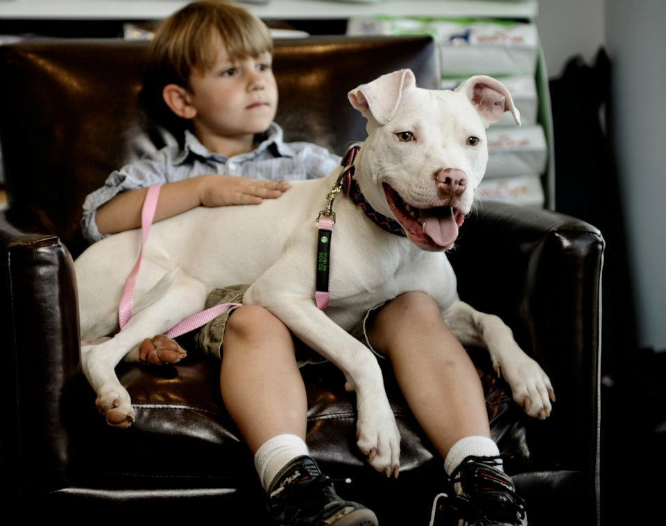 The Problem With People Not Pit Bulls American Pit Bull Foundation